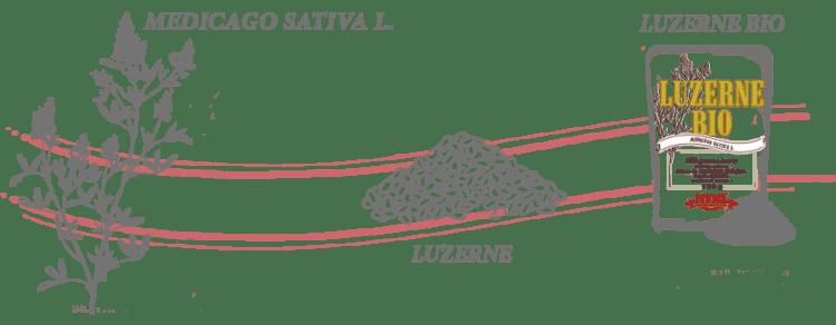 graines de Luzerne bio process_FR